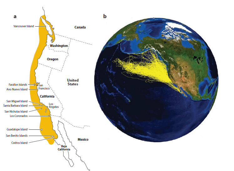 PICTURE 1. a) The image shows the distribution of Elephant Seals using ship and plane surveys. b) This image shows the distribution of female elephant seals determined through satellite tracking technology. As we can see, tagging technology has aided in the further understanding of animal's migration patterns by helping us look were we hadn't before.