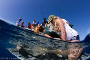 The RJD team secures a nurse shark