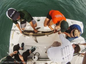 With the help of the RJD team, a Christopher Columbus student measures a blacktip shark.