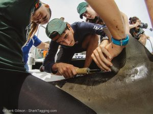 Undergraduate intern Grace Roskar helps a Christopher Columbus student apply a dart tag to a bull shark.