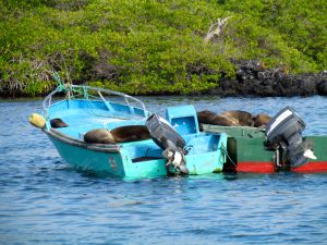 Boom and bust fishing cycles in the Galapagos Islands has led to the development of ecotourism, some of which as been very difficult on the locals.