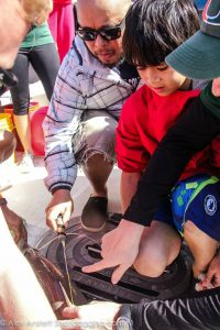 Tristan and Jivan, our citizen scientists for the day, help insert a spaghetti tag into the sharks dorsal fin.
