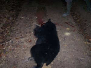 An illegally killed bear found outside of the Avoyelles Parish in Louisiana.