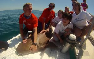 Our volunteers gathered around one of our Nurse Sharks after taking data and measurements, with interns Jake Jerome, team leader David Schiffman, and intern Emily Nelson