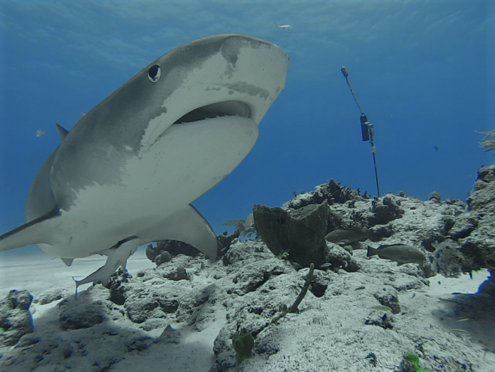 Climate Change & Sharks | Shark Research & Conservation ...