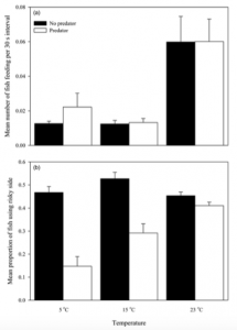 Figure 3. The graphs compare the response of the fathead minnows exposed to different temperatures to the presence and absence of the yellow perch. The top graph (a) shows that temperature did not affect whether the fathead minnows fed at the high-risk feeder or at the low risk feeder. The bottom graph (b) shows that with the predator visibly present, the fathead minnows preferred to feed at the low-risk feeder at cooler water, but in warmer water, they discriminated less between the feeders.