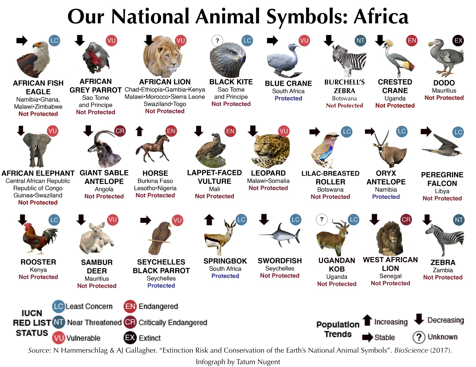 national animal symbols africa shark research
