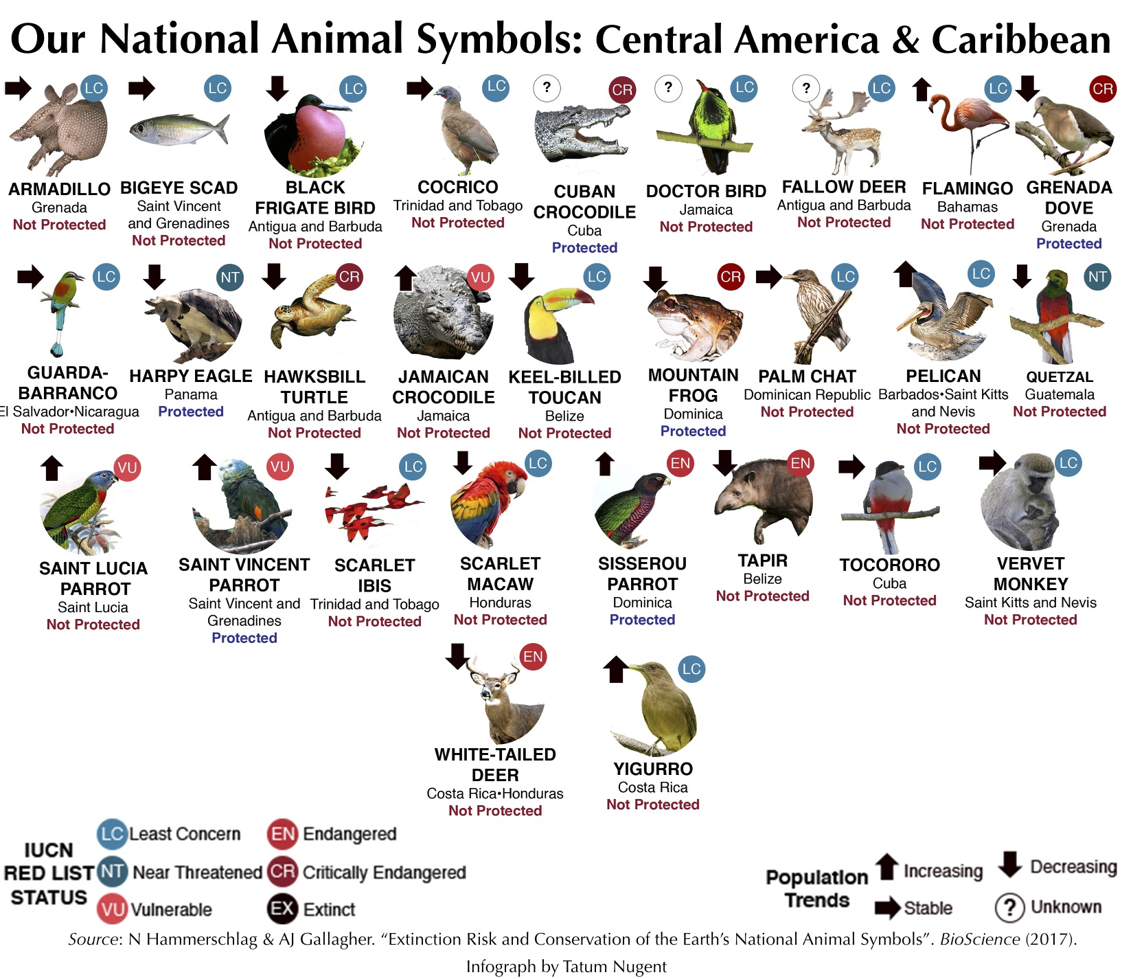 National animal symbols central america and caribbean shark central americacaribbean biocorpaavc Image collections