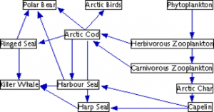 An example of the complexity of marine food webs. Wikimedia commons