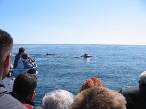 Whale watching tour in Bar Harbor, Maine