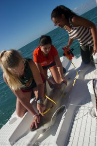 Hannah and Gabi assist a participant in taking measurement data of a shark.
