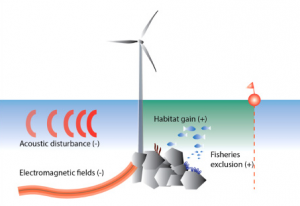 Figure 2: An overview of the main pressures from offshore wind farms during the operational phase. Expected effect on the local abundance of marine organisms is indicated as (+) aggregation/increase, or (−) avoidance/decrease (Bergström et al. 2014).