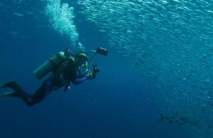 Scuba diving, if done responsibly, is a great example of a non-extractive way to interact with the underwater world. Photo credit: Wolcott Henry/Marine Photobank
