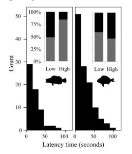Histogram of latency time in seconds for S. scriba (left panel) and D. annularis (right panel). The inset panels show the proportion of captured (black) and non-captured (grey) in high and low intensity fishing environments for both fish species.