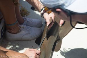A participant tags a small nurse shark captured that day