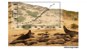 Northern elephant seal rookery on Año Nuevo Island, CA. The graph depicts the increase in the number of births of elephant seals since 1960.