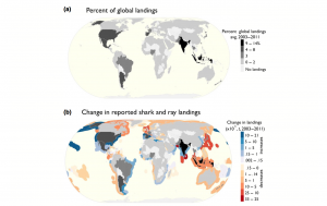 fishing. Figure 1. Global distribution of (a) country-specific shark and ray landings averaged between 2003 and 2011 and mapped as a percent of the total. (b) the difference between the averages of landings reported in 2001-2003 and 2009-2011