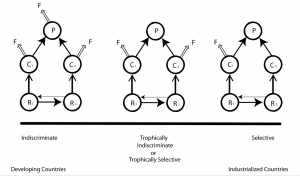 Figure 1. The three fishing strategies examined in this study are indiscriminate (left), trophically selective (middle), and selective (right). The symbols R, C, P and F stand for resources (e.g., seagrass), consumers (e.g., parrotfish), predators (e.g., sharks) and fishing mortality, respectively.