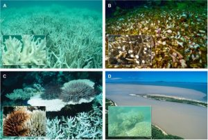Figure 2: (A) Thermal stress related coral bleaching (B) Damage caused by cyclone waves (C) Damage caused by crown of thorns starfish outbreaks (D) Damage resulting from excessive freshwater inundation