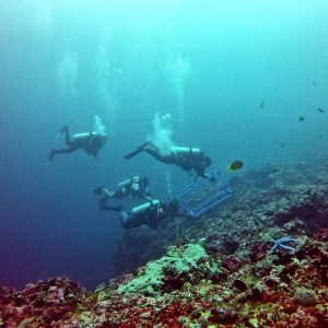 Figure 2. Research divers deploying quadrat for photo capture along the cleaning station. Large teams are used per quadrat, thus impact to the coral surface is minimalized.