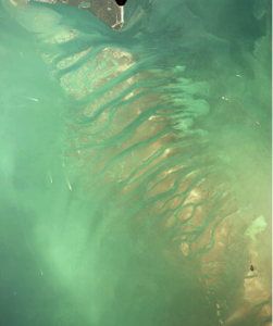 An aerial photo of Safety Valve, the region of shallow sand flats and tidal channels that delimit the entrance of the Atlantic Ocean to Biscayne Bay. The SRC team fishes this spot often.