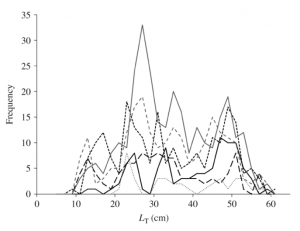 Figure 2: A frequency - size distribution of Little Skate specimens collected throughout various years. The solid gray line represents the year 2007, and shows a high peak below the age range of maturity, beginning at 32 cm. Samples from 2008 and 2009, the two dotted lines, are seen to be much lower. This could be due to a natural decrease from fishing pressures or a low catch number (Kelly and Hanson 2013)
