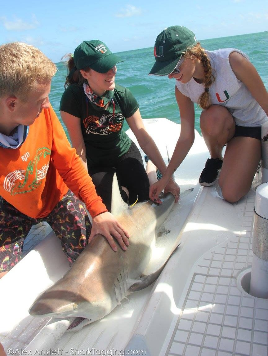 citizen science public expeditions shark research frequently asked questions