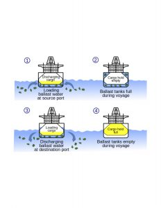 Figure 1. Depiction of how Ballast Water Management can instigate water pollution of the seas from untreated ballast water discharges