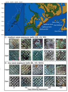Figure 2: Six Reefs of the Study Site in Palau Caption: This map indicates where the 6 reefs used in the study are located along the Palau coastline. The pictures indicate differences in coral recruitment between caged (shielded from herbivorous fish) and uncaged (open to grazing) portions of the reef. Source: Doropoulous et al. 2016